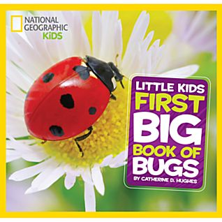 Little Kids Big Book of Bugs