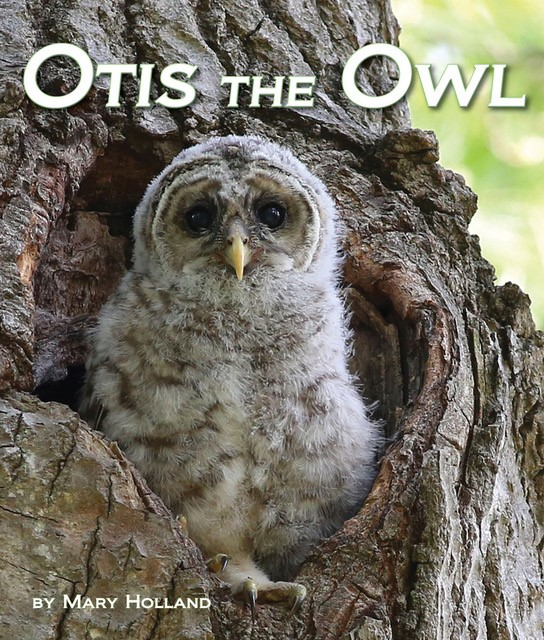 Otis the Owl