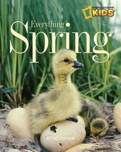 Everything Spring