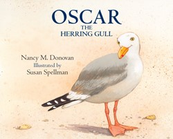 Oscar the Herring Gull
