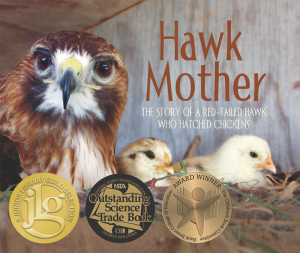 Hawk Mother: The Story of a Red-Tailed Hawk Who Hatched Chickens
