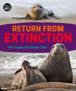 Return from Extinction: The Triumph of the Elephant Seal